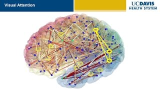 Download Brain Research: New Discoveries and Breakthroughs at UC Davis Video