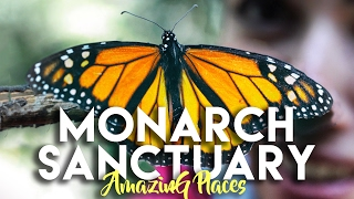 Download MONARCH BUTTERFLY SANCTUARY EL ROSARIO AND SIERRA CHINCUA Video