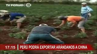 Download TV Perú - Perú podrá exportar arándanos a China Video