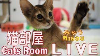 Download キャットウォーク【みゃう】 Catsroom catwalk Live【Cats room Miaou】 Video