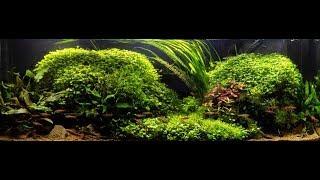 Download Zakládání akvária s mechy a jak na řasu v akváriu Video