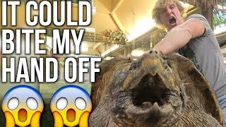 Download 200 POUND ALLIGATOR-SNAPPING TURTLE! Video