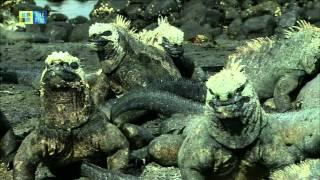 Download Galápagos Islands (UNESCO/TBS) Video