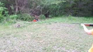 Download Rabid raccoon gets shot Video