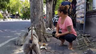 Download Neglected & Abandoned Dog Stays Loyal for 7 years Video