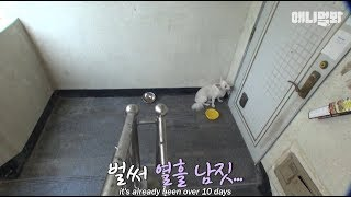 Download ″주인님이 열흘 째 문을 열어주지 않아요..″ㅣA dog endlessly waiting for someone in front of empty house.. Video