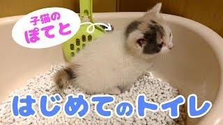 Download 子猫のぽてと・ひとりでトイレできるのか!? Video