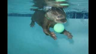 Download Baby Otter Swimming Video