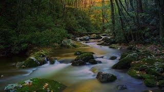 Download Day Hike and Photos in Great Smoky Mountains National Park Video