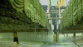 Download Algae Power Video