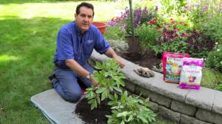 Download How To Transplant Peonies Video
