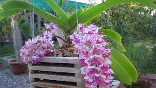 Download 34 loài hoa lan rừng đẹp nhất hiện nay Video