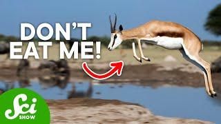 Download 10 Bizarre Ways to Avoid Being Dinner Video