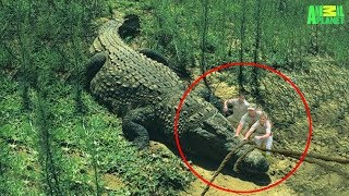 Download 7 Largest Crocodiles Ever Recorded Video
