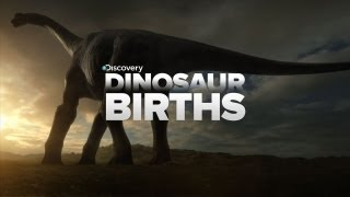 Download How Dinosaurs Are Born Video
