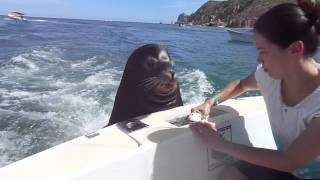 Download Feeding the sea lions! Video