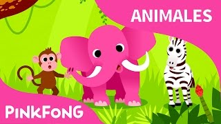 Download Animales, Animales | Animales | PINKFONG Canciones Infantiles Video