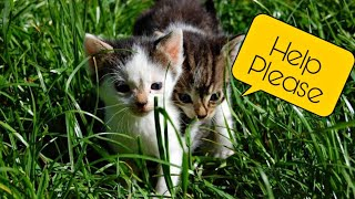 Download Brother sister abandoned kittens gets a new home| two stray kittens adopted|siblings kittens| mar fy Video