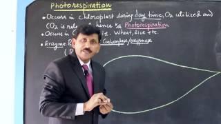 Download Photorespiration - khemchand sardaro Video