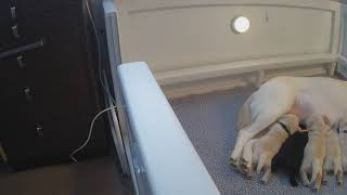 Download Nursery at Warrior Canine Connection Cam 01-18-2018 04:43:58 - 05:43:58 Video