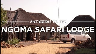 Download Ngoma Safari Lodge, Chobe National Park | Safari365 Video