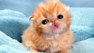 Download Funny Cute Baby Animal Videos Compilation 2014 [NEW] Video