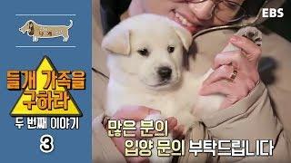 Download 세상에 나쁜 개는 없다 - 들개 가족을 구하라, 두 번째 이야기 #003 Video