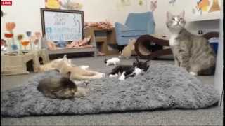 Download Tiny Kittens Otto escapes then kittens pass out Shelly discovers Otto and fixes it Video