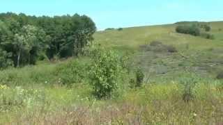 Download Незаконная вырубка леса. Video