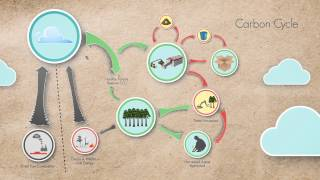 Download What is ″Carbon Neutrality″? Video