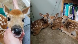 Download Woman doesn't close backdoor as storm nears, is stunned when she finds 3 baby deer inside Video