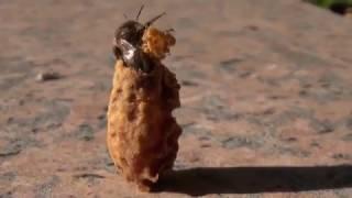 Download Naissance d'une reine abeille Video