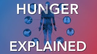 Download Intermittent Fasting & Hunger - What the Science says Video