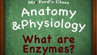 Download Anatomy and Physiology Lectures: What are Enzymes? Video
