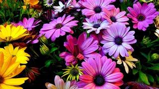 Download Сборник красивой музыки для души (музыка цветов) !!! Video