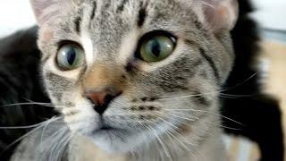 Download Kitten Close Up 2017-11-25 Video