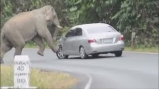 Download AMAZING ANIMAL ENCOUNTERS | WOW Video