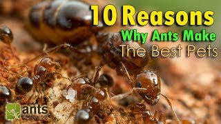 Download 10 REASONS WHY ANTS MAKE THE BEST PETS Video
