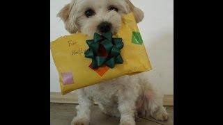 Download Holly Hund - Happy Birthday Video