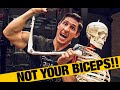 Download Working Out with Biceps Tendonitis (DON'T SKIP BICEPS!) Video