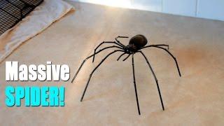 Download BIGGEST SPIDER EVER?! Video