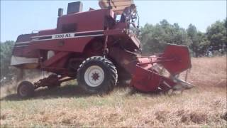 Download Trebbiatura biama ''avena'' con fiatagri laverda 3300al Video