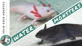 Download I Got Axolotls from a Fan! // Unboxing My New Pets Video