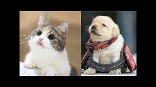 Download Funny Baby animals Videos Compilation - Cute Animals Video Video