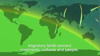 Download WMBD 2012 Trailer. ″Migratory birds and people - together through time″ Video