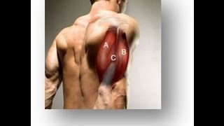 Download Triceps Workout For Developing The Inner, Outer and Long Heads Video