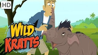 Download Wild Kratts - Asian Elephants (Season 5 Clip!) | Kids Videos Video