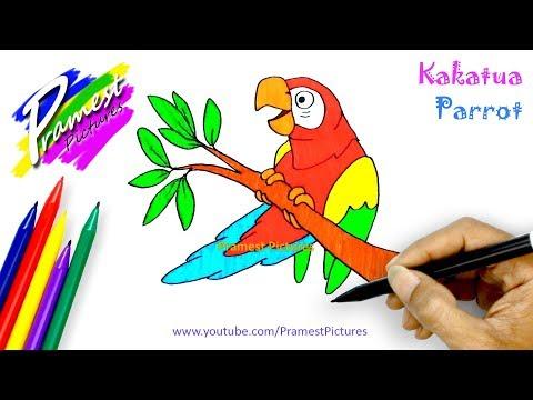 Stream Kakatua Cara Menggambar Dan Mewarnai Gambar Burung Untuk