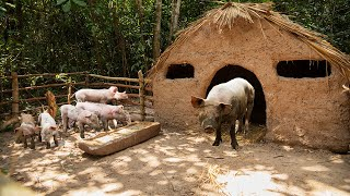 Download Rescue 7 Baby Wild Pigs with Mama Pig and Building safety Mud House For Pig Family Video