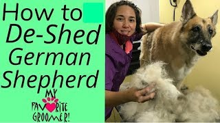 Download How to Brush and Deshed a German Shepherd Video
